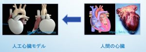 図3 たとえば「人工心臓」は、「人間の心臓」をまねて作られる。Arranged by 飯箸